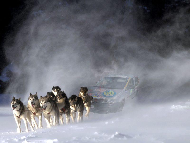 Hunde ziehen GO-MOBIL